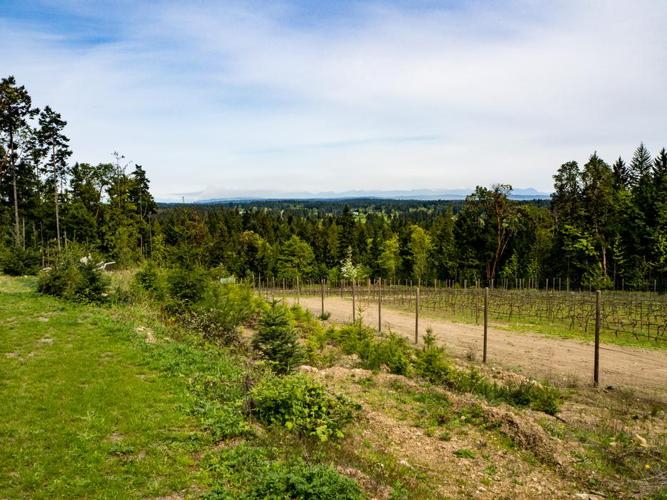 25 Acres with Stunning Views!