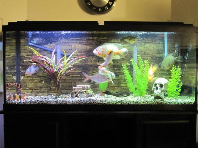 fish tank 50 gallon 50 gallon fish tank everything