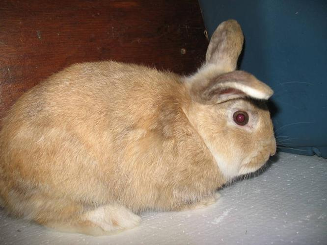 Adopt or help a rescue bunny this Christmas