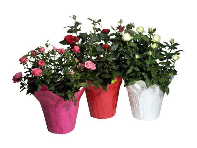 BIGGEST SALE ON ALL FLOWERING PLANTERS & GIFT BASKETS