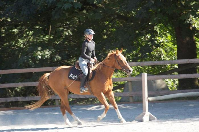 Horse for Lease: Metchosin, BC
