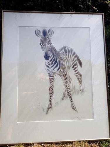Young Zebra - Ralph Thompson artist