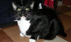 Breed: Domestic Short Hair-black and white   Age: Adult   Sex: M   Size: L Dali is a big handsome boy, likely around 5 years old. He is very mellow and laid back and can even be found lounging on his back. Dali is affectionate and friendly and loves a
