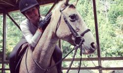 Need to cut back on my horse count. Pebbles is a 14 year old Appaloosa mare. She a stocky 14,2 hh pony. Going well under saddle. New to jumping but picking it up quick. She's used as an intermediate lesson horse @ WestShore equestrian centre. She's still
