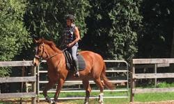 Lovely thoroughbred, quarter horse. Loves to trail ride. Goes English or Western Super mover. Excellent manners, a real pet. Loving kind, personable and price negotiable to the right home. 16.2. Copper chestnut. 11 years old. Very good for the farrier,