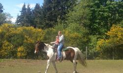 Registered Paint Mare, 9 years old 15.2hh well trained Eng. and Western. Great on roads and ring. Good on trails. Trailers well. Has been used as a lesson horse. Healthy and sound. Very responsive. Experienced rider. Very pretty sweet mare. Great