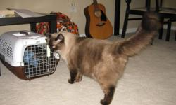 Beautiful male ragdoll cat for sale His name is Bailey Purebred ragdoll Seal colorpoint Born May 25, 2010 Kept Indoor Very playful and curious Sociable and gentle Purrs a lot, especially when you pet him. Regular visit to veterinarian for check up/shots