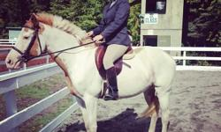 15.1hh 6 year old paint gelding for third (2 day/wk) or half (3 day/wk) or full lease. You'd have a choice of two different barns that he can be located at, lease price varies slightly depending which one. Either way you'd have access to an indoor, lit