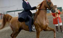We are British Columbia's premiere Saddle Seat riding academy. If you are serious about learning how to ride correctly, and advancing into showing horses please come and check us out. We are located one minute off the highway in North Duncan. Text or