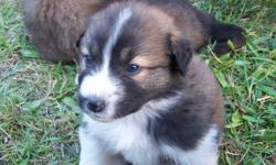 cute and fluffy and ready to go to loving homes .250-229-2299