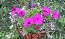 beautiful basket, in errington, email please thanks