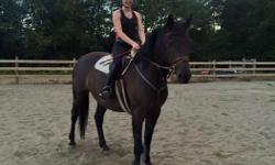 beautiful and talented 6 year old mare, 15.3HH Hanoverian Canadian cross. Started over small fences, walk, trots, and canters nicely. super good on the ground. Lunges, Hauls, Baths, ect. Sound and healthy, good with the vet and farrier. Has been trail