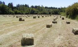 Fresh mixed grass first cut hay, stacked and covered, ready to be loaded. Call 250-721-1793 home or 250-858-8514 cell or e-mail.