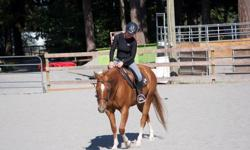 15.1hh QH gelding for lease. English Tack available for use. Next to the galloping goose for miles of trail riding, the beach and short hack to Metchosin Community Riding Ring. There is also a sand round pen on the property. Solid W-T-C in riding ring,