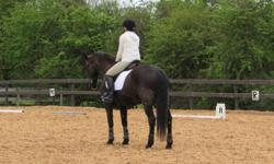 * A Beautiful Spanish-Norman Mare * Age: 17 years; 15.3 hands * Dressage (Level 1 - learning) * Hard working; Very intelligent; Quick learner; Sweet Temperament * Very Forward Walk; Smooth Trot and Canter * Only for an Experienced, Mature, Responsible