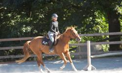 Space available for an intermediate or experienced rider. The property is located next to the galloping goose trail for miles of trail riding and a short hack away from the Metchosin Community Riding Ring (requires registration at the Community Hall).