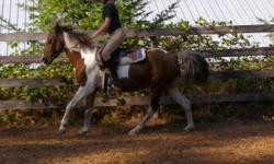 Hey, I've been riding for 2 years but a bit before that and I'm looking for a horse to have fun with and go to a few shows and trail riding. I like goofy personality and playful I prefer mares but geldings are great too. Anything from 15hh+ is great, the