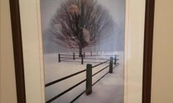 """Beautiful Framed Tree Picture. Size is 31"""" x 40"""". Will sell for $30. Parksville 250-248-8907."""
