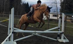 I'm looking for a barn job in nanaimo for $10 an hour, I can do paddocks, feed, groom, and help around the barn:) I need this job to pay for my horse shows and prove to my parents I can pay for my own things and do it on my own. I can come on any day