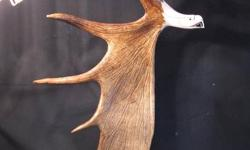 Selling all kinds of moose antler carvings Prices start at $85 and go up  Please contact if you have any questions