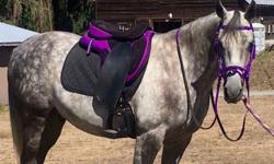 """Cob size or smaller headed horse (Arab etc). Browband is 15"""". Rubber grip reins included! Purple, blue, red, green, or black. Cheek straps and chinstrap adjustable. Noseband has removable flash. Can be used with a bit or rigged up as a side pull bitless"""
