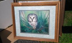 Beautiful photograph of owl in frame.