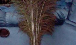 1) Buy pack of 50 feathers for $50 2) Separate feathers available for $1.50 each