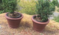 healthy plants with pots $30 each with pots ($40 just for two plants.)