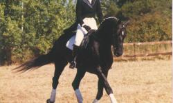 GET BACK IN THE SADDLE - FOR ADULTS RETURNING TO RIDING. BEGINNER ADULTS WELCOME TOO! Join the friendly, supportive, and fun-loving group of mature adults who ride with Kathy Harrison at Harrison School of Horsemanship. With Kathy's experienced and