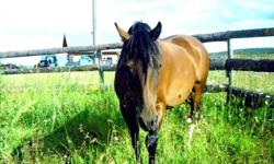 Hey there! I just bought a mare and she is being shipped here at the end of the month from Williams lake. The place I was originally hoping to keep her filled up, and I'm now on the hunt for a place to keep her and my sisters horse. My horse is a 6 year