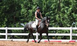 We are looking for someone to Clean paddocks. You can do this in exchange for free lease/lessons on one of our super school horses, (they are all gorgeous!). This is a great opportunity to get some exercise, and some riding experience. If not interested