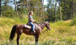 2001 APHA registered mare, 15 hands high. HANDS OFF MY ZIPPER, aka Roxy rides western or english. Was professionally trained and shown. Is awesome on the trails! Goes out alone or with a group. Great for the farrier, loading, clips, an all around great