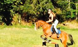 Robin is a flashy 8 year old 13HH Arab X Welsh. With her wonderful personality and excellent ground manners she is an amazing pony for a confident beginner in lessons. Robin has shown at the cow ex, has miles and miles of trails , has been in Pony Club